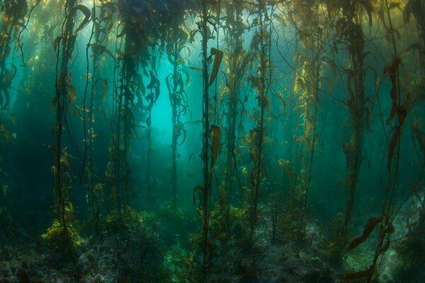 Chaluhový les pri Ohnivej zemi.