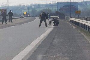 Chytiť ovce pomáhali policajti aj pracovníci Národnej diaľničnej spoločnosti.