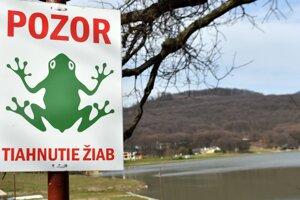Nastal čas, kedy žaby migrujú.