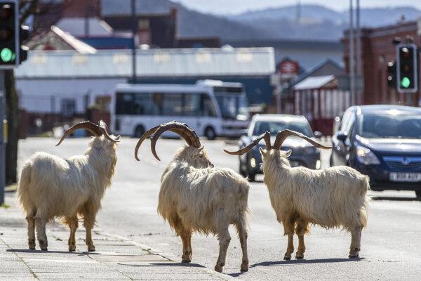 Kozy vo waleskom meste Llandudno.