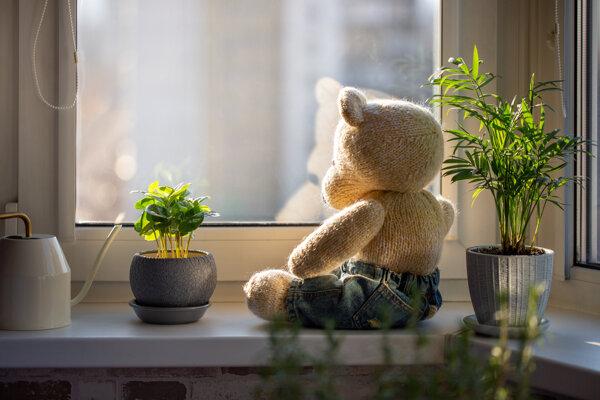 Na Novom Zélande vymysleli zábavku pre ľudí v izolácii. Deti rátajú macíkov v oknách.