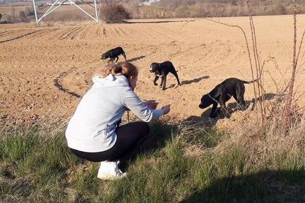 Len nedávno nitriansky útulok zachraňoval štyroch psíkov.