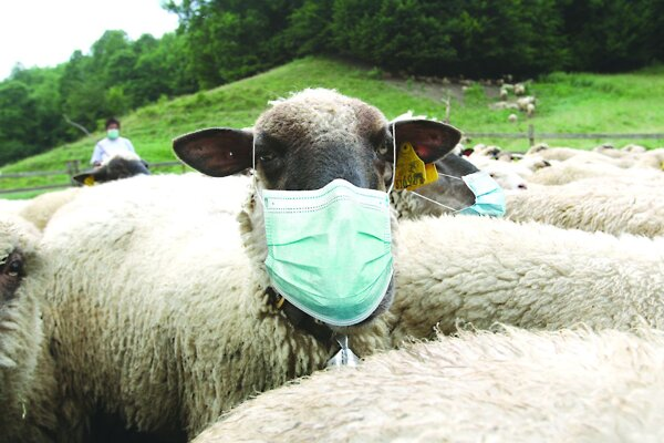 Tohtoročnú farmársku sezónu výrazne ovplyvnila pandémia.