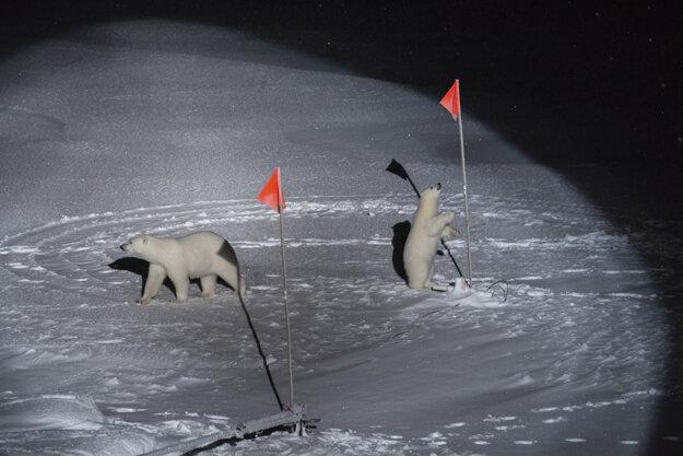 """Esther Horvath  (The New York Times) získala prvú cenu v kategórii """"Contemporary Issues Singles"""". Polárny medveď s mláďatami sa priblížili k zariadeniu vedcov z vedeckej expedície, ktorá skúma dôsledky arktickej klímy."""