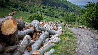 Kvietikovcom patria aj lesy v Štiavnických vrchoch. Boli sme sa tam pozrieť
