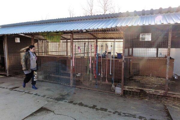 ⋌Momentálne majú Topoľčianske packy vstarostlivosti 38 psov a14 mačiek. Čo sa týka dočasnej opatery, počas dvoch mesiacov sa im takto podarilo umiestniť 12 zvierat.