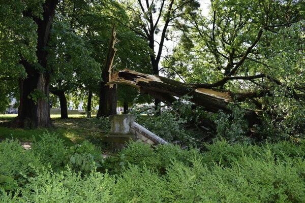V parku polámalo staré stromy.