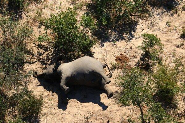 Prvé telá slonov začali nachádzať v okolí delty rieky Okavango v polovici mája.