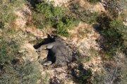 V Botswane žije odhadom približne 130-tisíc slonov, sotva tretina celkového počtu týchto zvierat v Afrike.
