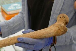 Jedna z nájdených kostí.