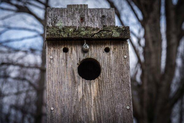 Vnímanie tvári na neživých objektoch sa nazýva pareidolia.