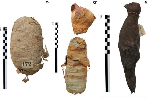Starovekí Egypťania mumifikovali aj zvieratá. Moderná trojrozmerná skenovacia technológia odhalila, ako pred viac ako dvetisíc rokmi žili a zomreli (zľava) had, mačka a vták.