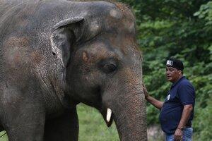 Slon Kaavan žil 35 rokov v nevyhovujúcich podmienkach v pakistanskej Zoo.