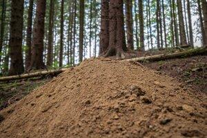 Kopa pôdy pripomínala pieskovisko.