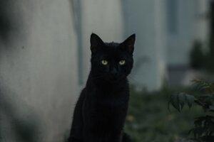 Čierna mačka nenosí vždy iba smolu.