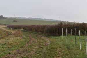 Poľná cesta na Lapanči.
