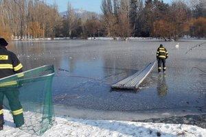 Hasiči zachraňujú labuť na jazere Hangócka v nitrianskom parku.
