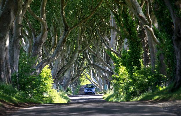 Známy chodník Dark Hedges zo seriálu Hra o tróny.