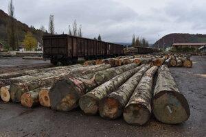 Štátny podnik LPM Ulič usporiadal dražbu dreva.