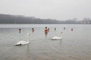 Vianočné plávanie zastrešovalo občianske združenie Slovenské ľadové medvede.