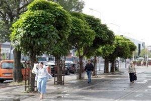Stromy pred VÚB na jeseň nahradia inými, pretože majú preschnuté korene.