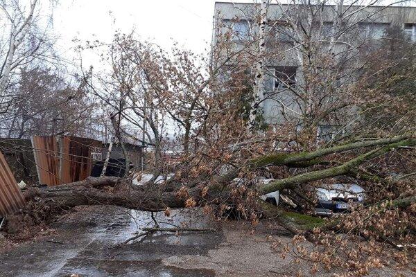 Spadnutý strom pristál na autách.