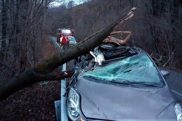 Statný strom dopadol priamo na idúce auto.