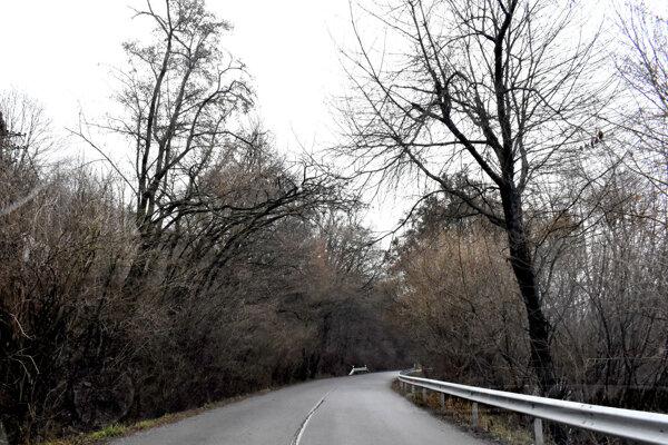 Naklonené stromy ponad cestu ohrozujú autá a ich pasažierov.
