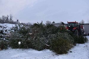 Zamestnancov TS za haldou stromčekov nebolo ani vidieť.