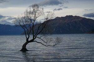Slávny strom uprostred jazera vo Wanake.