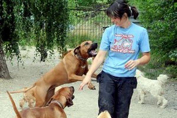 Podľa veterinárov musia byť čipované všetky psy. Na ministerstve si to nemyslia.