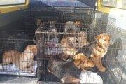 Občianske združenie zachránilo z osady spod Tatier dohromady desať zúbožených psíkov.