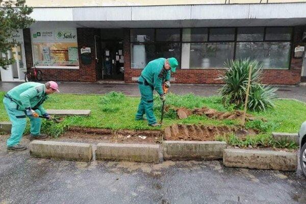 V Topoľčanoch ožívajú zelené plochy, výsadbu kvetov a drevín si obyvatelia mesta pochvaľujú.