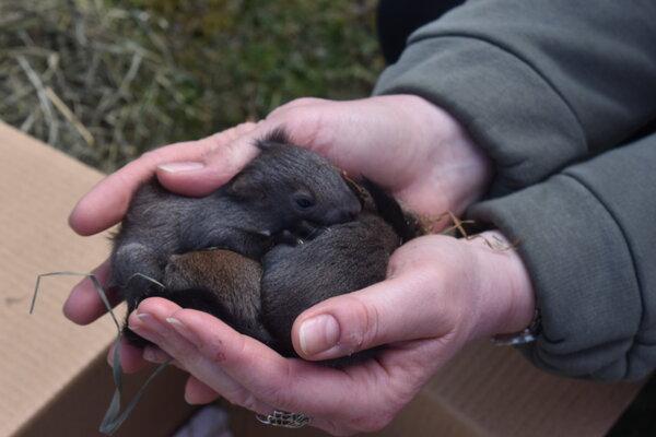 Veveríčatá sa mali k svetu.