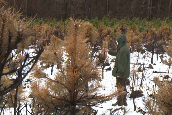 Konateľ mestských lesov Pavel Debnár.