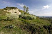 Významná paleontologická lokalita Sandberg, ktorá je súčasťou Národnej prírodnej rezervácie Devínska Kobyla.