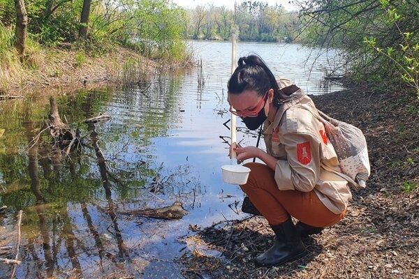 Dobrovoľníčka Linda Kisková Bohušová odoberá vodu na monitoring výskytu lariev komárov.