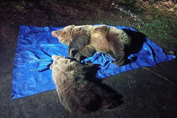 Medvede najprv uspali, potom eutanazovali.