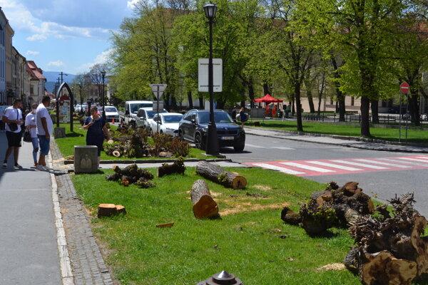 Vyrúbané stromy na levočskom námestí nahradia nové.