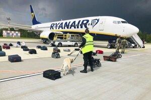 Bezpečnostná služba za pomoci psa kontroluje batožinu cestujúcich lietadla spoločnosti Ryanair s registračným číslom SP-RSM, v ktorom cestoval aj bývalý šéfredaktor bieloruského opozičného spravodajského portálu Nexta Raman  Pratasevič, na letisku v Minsku 23. mája 2021.