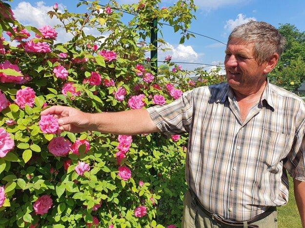 Pavel Bohuš vymenil paradajky a mrkvu za ruže.
