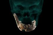 Časť lebky a čeľuste Homo Nešer Ramla.