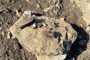 Počas odkryvu sa na mieste našli zvyšky zvieracích kostí.
