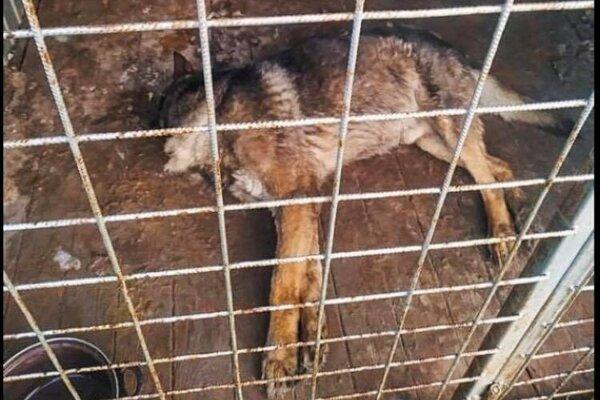 Zvieratá v karanténnej stanici žili v katastrofálnych podmienkach.
