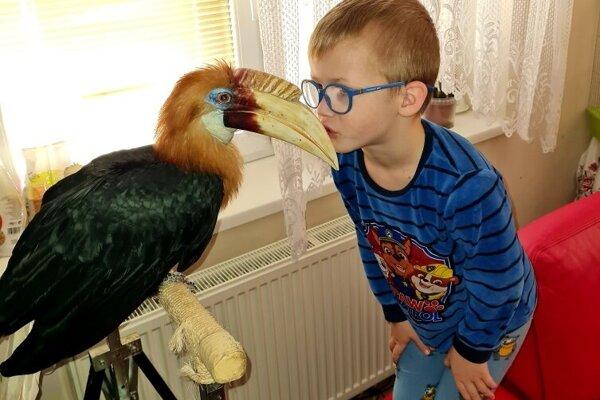 Zobákorožec papuánsky.