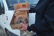 V Blatnici vyčíňal falošný kuriér. V balíku priniesol zhnité zemiaky.
