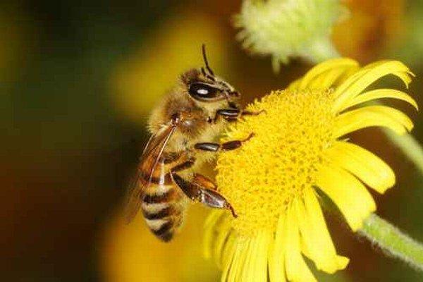 Bez včiel sa nezaobídeme.