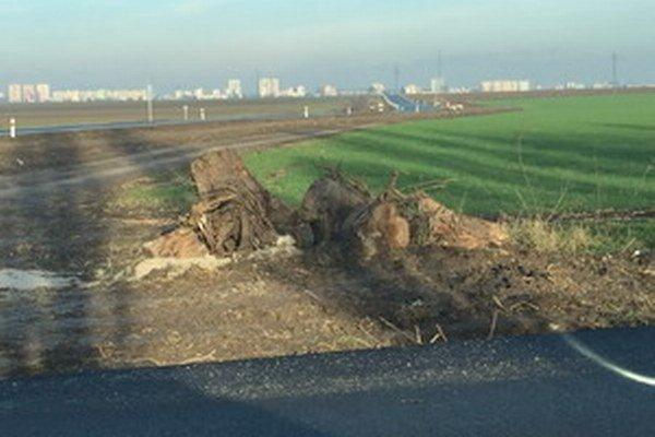 Čitatelia nás upozornili na neporiadok po stromoch, TTSK tam pošle kontrolu. V pozadí vidno cestu do Trnavy bez stromov.