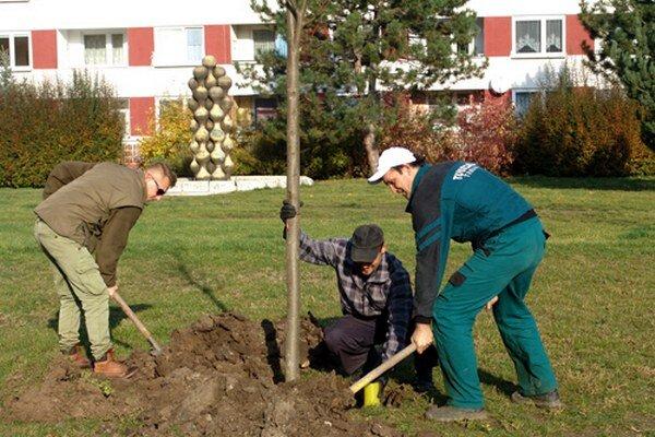 Nové stromy pribudli aj na Clementisovej ulici.
