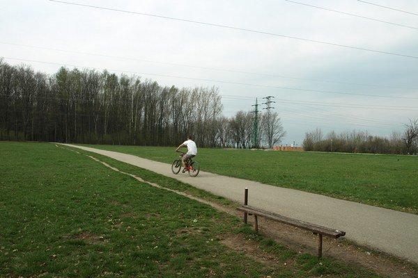 Stromy v lesoparku musia uvoľniť priestor pre cestu.
